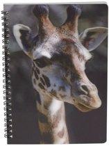 Giraffe schrift 3D 21cm