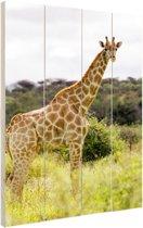 Giraf in de natuur Hout 20x30 cm - Foto print op Hout (Wanddecoratie)