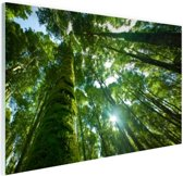 Tropische jungle in Azie Glas 90x60 cm - Foto print op Glas (Plexiglas wanddecoratie)