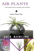 Air Plants: the Ultimate Guide to Growing Your Tillandsia + Indoor Plants Tips