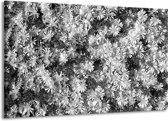 Schilderij | Canvas Schilderij Bloemen | Zwart, Wit, Grijs | 140x90cm 1Luik | Foto print op Canvas