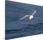 Reuzenstern vliegt over de zee Canvas 180x120 cm - Foto print op Canvas schilderij (Wanddecoratie woonkamer / slaapkamer) XXL / Groot formaat!