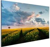 Gele bloemen bij zonsondergang Aluminium 120x80 cm - Foto print op Aluminium (metaal wanddecoratie)