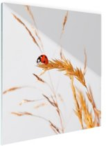 Lieveheersbeestje op gras Glas 180x120 cm - Foto print op Glas (Plexiglas wanddecoratie) XXL / Groot formaat!