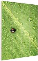 Lieveheersbeestje op blad met druppels Hout 80x120 cm - Foto print op Hout (Wanddecoratie)