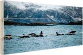 Groep orkas Hout 120x80 cm - Foto print op Hout (Wanddecoratie)