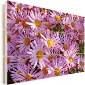 Aster bloemen in een tuin Vurenhout met planken 60x40 cm - Foto print op Hout (Wanddecoratie)
