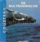 Dieren in de kyker bultrugwalvis