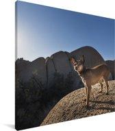 Dwergpinscher op een berg Canvas 20x20 cm - klein - Foto print op Canvas schilderij (Wanddecoratie woonkamer / slaapkamer) / Huisdieren Canvas Schilderijen