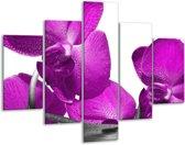 Glasschilderij Orchidee | Paars, Wit | 100x70cm 5Luik | Foto print op Glas |  F003596