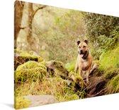 Een Staffordshire Bull Terrier in het bos Canvas 180x120 cm - Foto print op Canvas schilderij (Wanddecoratie woonkamer / slaapkamer) / Huisdieren Canvas Schilderijen XXL / Groot formaat!