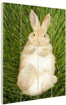 Konijn liggend in gras Hout 20x30 cm - Foto print op Hout (Wanddecoratie)