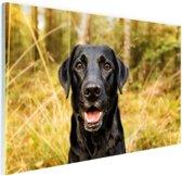 Gelukkige zwarte hond Glas 90x60 cm - Foto print op Glas (Plexiglas wanddecoratie)