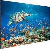 Koraalrif met schildpad Aluminium 90x60 cm - Foto print op Aluminium (metaal wanddecoratie)