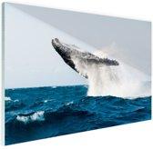 Walvis springt achterover in blauw water Glas 90x60 cm - Foto print op Glas (Plexiglas wanddecoratie)