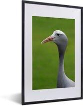 Foto in lijst - Dierenportret van een Paradijskraanvogel fotolijst zwart met witte passe-partout 40x60 cm - Poster in lijst (Wanddecoratie woonkamer / slaapkamer)