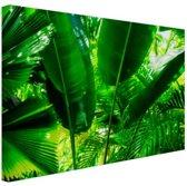 Tropische bladeren in jungle  Canvas 120x80 cm - Foto print op Canvas schilderij (Wanddecoratie woonkamer / slaapkamer)
