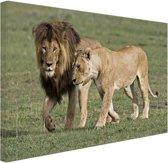 Leeuwenpaar Canvas 120x80 cm - Foto print op Canvas schilderij (Wanddecoratie woonkamer / slaapkamer) / Dieren Canvas Schilderijen