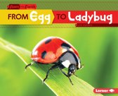From Egg to Ladybug