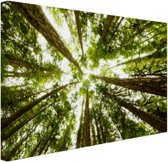 Hoge groene bomen in jungle Canvas 120x80 cm - Foto print op Canvas schilderij (Wanddecoratie)