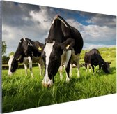 Drie Holstein koeien Aluminium 60x40 cm - Foto print op Aluminium (metaal wanddecoratie)