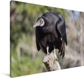 Een zwarte gier zit op een boomstam Canvas 90x60 cm - Foto print op Canvas schilderij (Wanddecoratie woonkamer / slaapkamer)