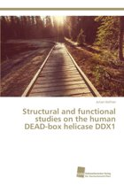 Structural and Functional Studies on the Human Dead-Box Helicase Ddx1