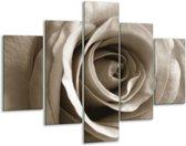 Glas schilderij Roos, Bloem | Sepia, Bruin | 100x70cm 5Luik | Foto print op Glas |  F006586