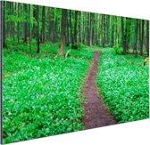 Weg door het groene bos Aluminium 90x60 cm - Foto print op Aluminium (metaal wanddecoratie)