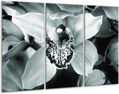 Glas schilderij Bloem | Grijs, Groen | 120x80cm 3Luik | Foto print op Glas |  F006681