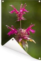 Een sierlijke bergamot plant Tuinposter 80x120 cm - Tuindoek / Buitencanvas / Schilderijen voor buiten (tuin decoratie)