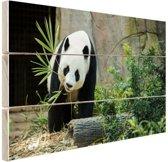 Grote panda Hout 30x20 cm - klein - Foto print op Hout (Wanddecoratie)