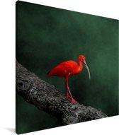 Rode ibis op een boomtak Canvas 20x20 cm - klein - Foto print op Canvas schilderij (Wanddecoratie woonkamer / slaapkamer)