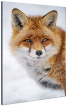 Portret van een vos Aluminium 40x60 cm - Foto print op Aluminium (metaal wanddecoratie)