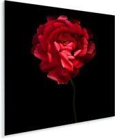 Een rode boterbloem met een zwarte achtergrond Plexiglas 20x20 cm - klein - Foto print op Glas (Plexiglas wanddecoratie)