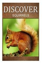 Squirrel - Discover