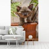 Fotobehang vinyl - Een jong Burmees katje zit tussen de planten breedte 270 cm x hoogte 400 cm - Foto print op behang (in 7 formaten beschikbaar)