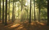 Fotobehang - Zonlicht in bos - 418x260 cm. Vliesbehang 150 grams A-Kwaliteit. Art. F009.39
