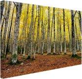 Gele bladeren in het bos in de herfst Canvas 120x80 cm - Foto print op Canvas schilderij (Wanddecoratie)