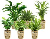 Ecoworld Luchtzuiverende Kamerplanten – 4 Zuurstofgevende Planten – Pot 12cm – Hoogte 40cm