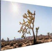 Woestijn met bomen Aluminium 90x60 cm - Foto print op Aluminium (metaal wanddecoratie)