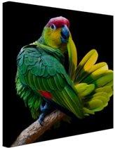 Papegaai afdruk Canvas 80x60 cm - Foto print op Canvas schilderij (Wanddecoratie)