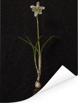 Een heel sneeuwvlokje Poster 120x160 cm - Foto print op Poster (wanddecoratie woonkamer / slaapkamer) XXL / Groot formaat!
