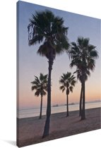 Palmbomen bij Long Beach in Noord-Amerika Canvas 60x90 cm - Foto print op Canvas schilderij (Wanddecoratie woonkamer / slaapkamer)