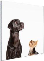 Omhoog kijkende honden Aluminium 20x30 cm - klein - Foto print op Aluminium (metaal wanddecoratie)