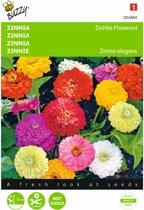 Zinnia dahliabloemig - Zinnia elegans - set van 8 stuks