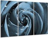 Glas schilderij Roos | Blauw, Grijs | 120x80cm 3Luik | Foto print op Glas |  F006558