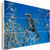 Geel gefactureerde neushoornvogel zit in een blauwe hemel Vurenhout met planken 30x20 cm - klein - Foto print op Hout (Wanddecoratie)