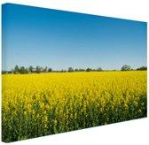 Oliezaadveld foto Canvas 60x40 cm - Foto print op Canvas schilderij (Wanddecoratie)