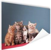 Portret van groep kittens Poster 60x40 cm - Foto print op Poster (wanddecoratie woonkamer / slaapkamer) / Dieren Poster